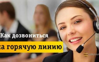 По каким контактам можно связаться со службой поддержки Билайн?